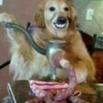 El perro ._.XD